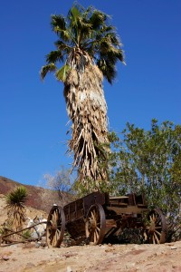 Old abandoned horse wagon by palm tree